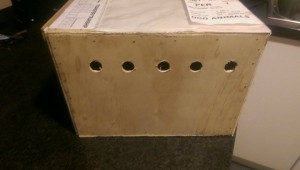 Display of a Box used for Freighting Birds